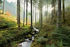 Paradise again (sigi-sunshine) Tags: green grün mist episch mystic epic bühlbächle blackforest forest bach bergbach wald woods schwarzwald oppenau germany deutschland ortenau ortenaukreis wandern hiking wanderweg trail badenwürttemberg creek stream paradies paradise