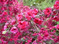 S5031471 (Ian Faz) Tags: flowers plants tress nessgardens