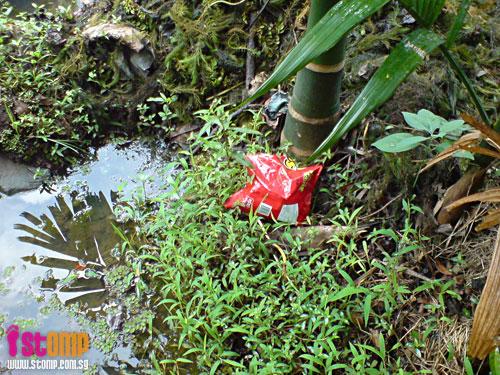 So depressing to look at this Bishan Park lotus pond