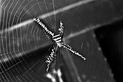 Web-crawler !!