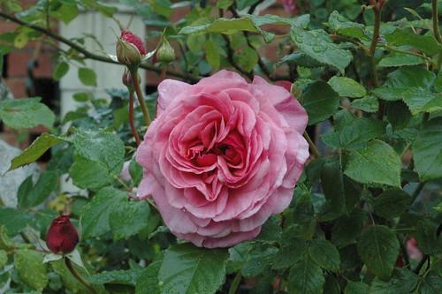garden in may 001