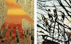 Papiercollage (epemsl) Tags: light colour texture collage illustration paper kunst paste photomontage papier minimalart papiercallage