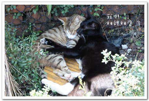 平溪線貓3
