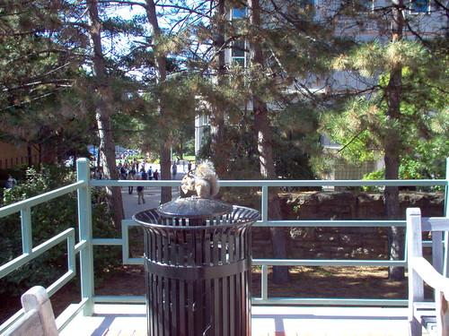 Campus Wildlife