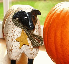 Sheep with rusty tin mustard star