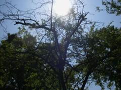 ortobotanico 119 (blum1) Tags: alberi fiori piante ortobotanico