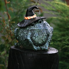 Enchanted Toad (Randy Son Of Robert) Tags: cute hat statue witch frog toad perched knickknack
