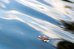Wave Goodbye (olvwu | 莫方) Tags: autumn usa reflection fall ga leaf pond wave savannah fallenleaf jungpangwu oliverwu oliverjpwu olvwu jungpang 莫方 吳榮邦