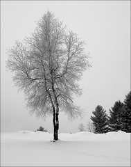 The Ice Tree (DF9999) Tags: trees winter fab bw nature rural bravo vermont fuji newengland s2pro sobeautiful thebigone mywinners abigfave holidaysvacanzeurlaub flickrenvy infinestyle flickrdiamond citrit flickrelite betterthangood theperfectphotographer landscapesdreams