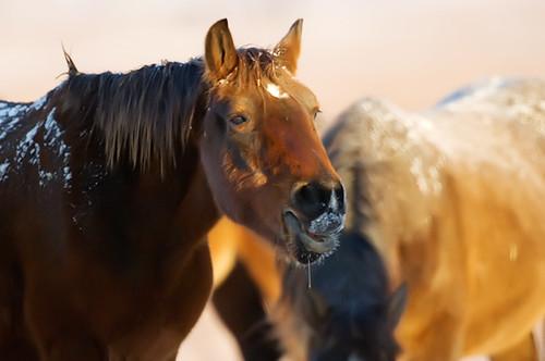 Feeding Horses 163