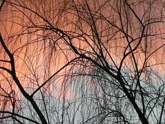 Tucker Sunset