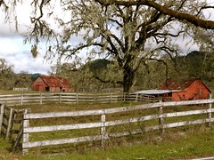 Two Red Barns (judi berdis) Tags: barn redbarn nca willits blueribbonwinner littlelakevalley mywinners mendocinoco