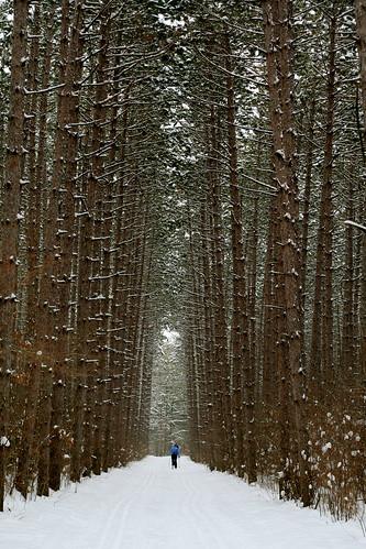 Through the pines [Jan 26]