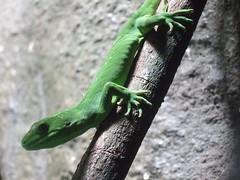 Gecko (Tkuta) Tags: newzealand hawkesbay