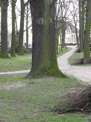Baumschnitt: Dorfaue