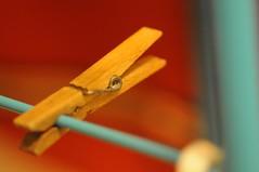 af micro nikkor 105mm (Trampelman) Tags: macro nikkor 105mmf28micro afmicronikkor105mm trampelman nikond300
