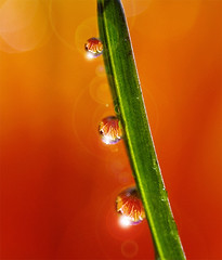 tic tac toe... (Lani Barbitta) Tags: fab orange wet water three drop dew daisy droplet lani gerber 60mm28 supershot nikond80 waterrefraction lanibarbitta barbitta
