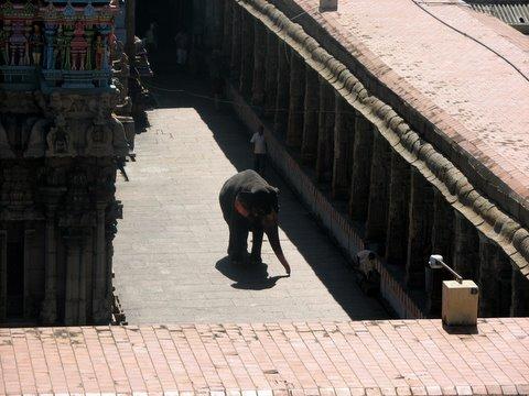 elephant in koodal azhagar temple 250308