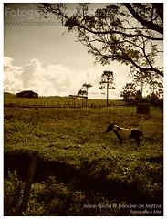 www.fotografeumaideia.com.br (fran-fotografeumaideia) Tags: canon de site nikon uma lovely fotografia namorados francine rocha mattos ideia fotografe jaison jaisonrocha francinedemattos fotografeumaideia