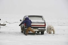 Polar Bear 6.JPG