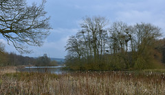 The Heronry (littlestschnauzer) Tags: heronry nests trees west yorkshire uk rookery breeding place colony herons bird nature birds wildlife country park parkland countryside rural winter february 2017 landscape river nikon scenic scenery rushes overcast