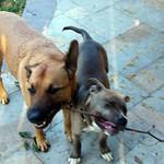 Bella and Juniper thumbnail