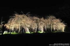 SUV_8786 (Cougar-Studio) Tags: castle nikon kyoto 京都 d3 nijo 二条城 nijocastle 世界遺產 元離宮 20110404