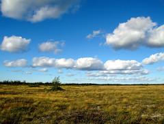 The Peat Bog (Orion 2) Tags: trees sky fall nature colors clouds landscape remote wilderness bog boreal tamarack peatbog muskeg 2010shot