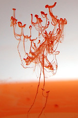 Dissolved Droplet Tree (árticotropical) Tags: