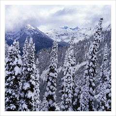 No Fall in the Cascades (jim.chan) Tags: winter snow rollei northcascades heatherpass velvia50 6008i