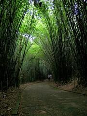 Tunel verde - Green tunel (Eli K Hayasaka) Tags: brazil verde green brasil nikon fb sãopaulo sampa jardimbotânico facebook 35faves challengeyouwinner duetos hayasaka anawesomeshot colourartaward artlegacy clicksp elikhayasaka superdueto