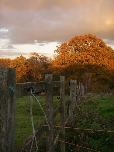 Autumn on the Stud Farm