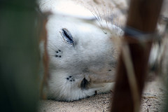 safe (the_boglin) Tags: seals donnanook