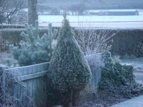 a frosty Xmas morning
