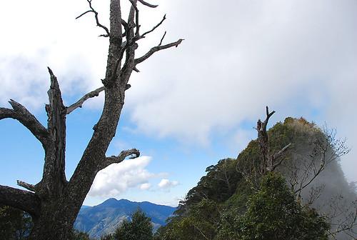 回望婦山與枯木