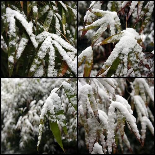 Snow Falling on Bamboo