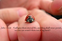 John 10:28 (flyingibis) Tags: john hand ladybug bible 1028 verse