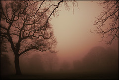 43/366 BiRTHDAY MORNiNG (Paradox-Pictures) Tags: world trees red colour art nature strange misty fog landscape happy weird early very peaceful ps eerie dew tranquil bithday morn moning mistymorn aplusphoto