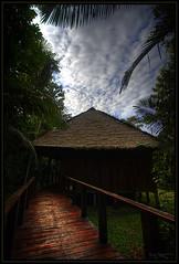 It's a jungle out there (Kaj Bjurman) Tags: trees sky peru puerto eos rainforest straw 2008 posada hdr kaj amazonas maldonado cs3 photomatix djungle 40d bjurman