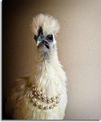 Fowl with a Pearls Necklace (AnnuskA  - AnnA Theodora) Tags: light pet cute chicken painting necklace hilarious funny different pearls vermeer unusual fowl hen inventive girlwithapearlearring criative 3000v120f galinhacomcolardeprolas
