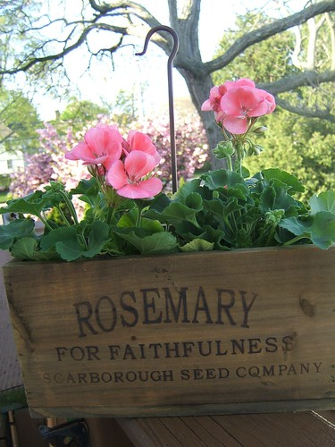 for my mom, Rosemary