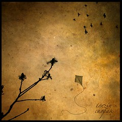 Dream of Life (Chopak) Tags: life light sky kite tree bird texture sepia contrast photoshop dark square fly flying high goal branch open name dream chapeau success tenzin themoulinrouge oldpaper darkcolors dreamoflife stealingshadows 2bdasest hourofthesoul