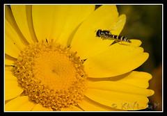 insecto-123 (Xavi GM) Tags: naturaleza insectos macro nature canon insect 5d macros bichos bicho macrophoto insecto macrophotography macrofotografia mywinners xavigm natureselegantshots