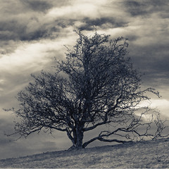 Tree and Sky (Dan Baillie) Tags: sky blackandwhite tree clouds landscape grey mono scotland hill hillside galloway dumfriesandgalloway puddock newtonstewart wigtownshire danbaillie bailliephotographycouk bailliephotography wigtownshirephotographer dumfriesandgallowayphotography