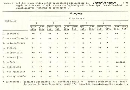 tabela comparativa entre os cromossomos politênicos da D.nappae e outras espécies.