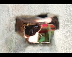 (70) Tags: animals cat sony gatto gatta thelittledoglaughed spiona myriam70