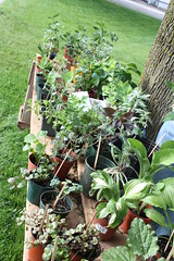 Plant Sale in Durham Region