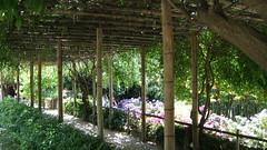 Jardin Aquatique (jopasamo) Tags: france gard labambouseraie