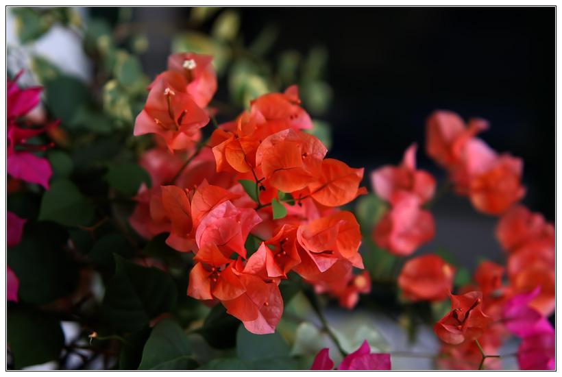 Flowers again!?