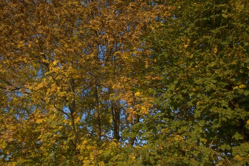 HDR: Colourful leafs